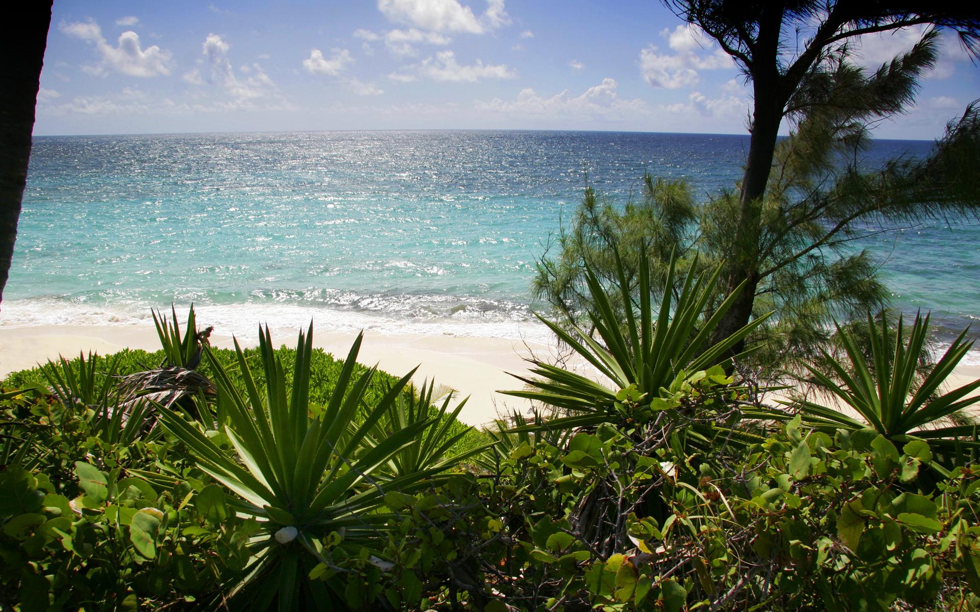 beach+foilage
